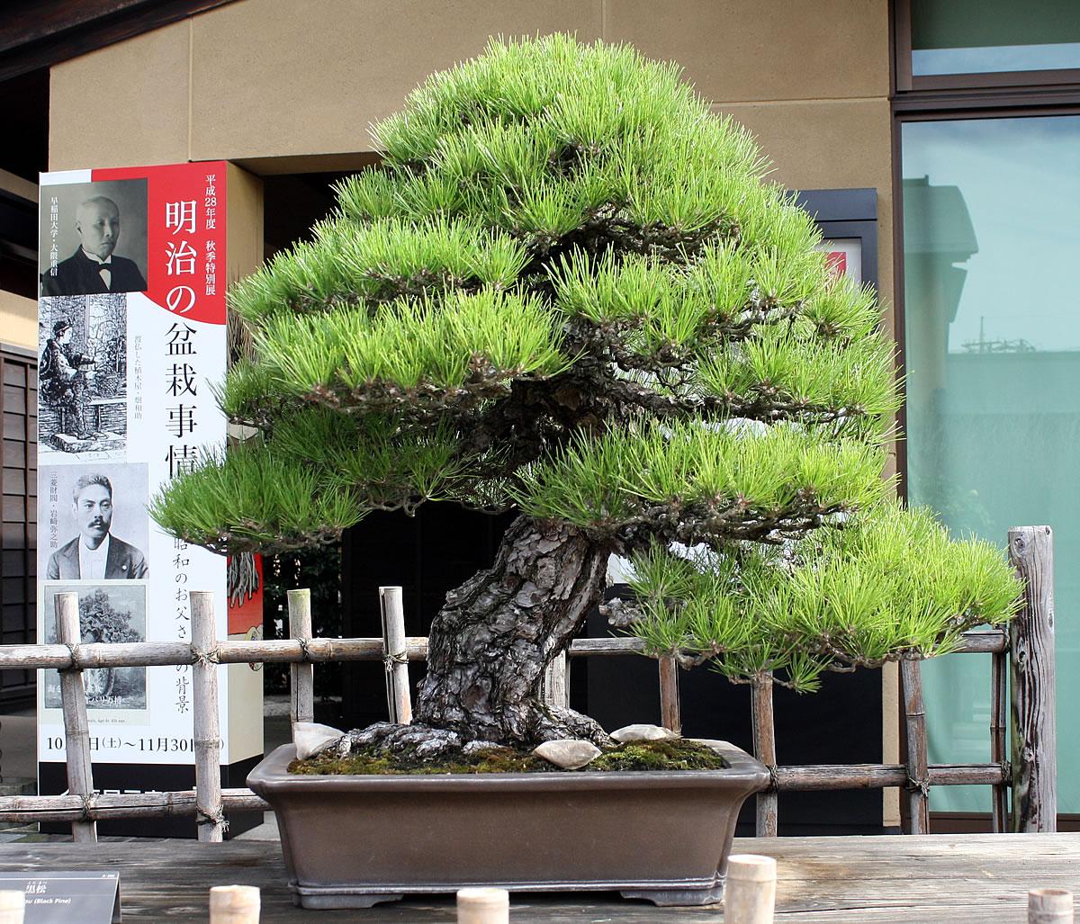 Omiya Bonsai Museum 01