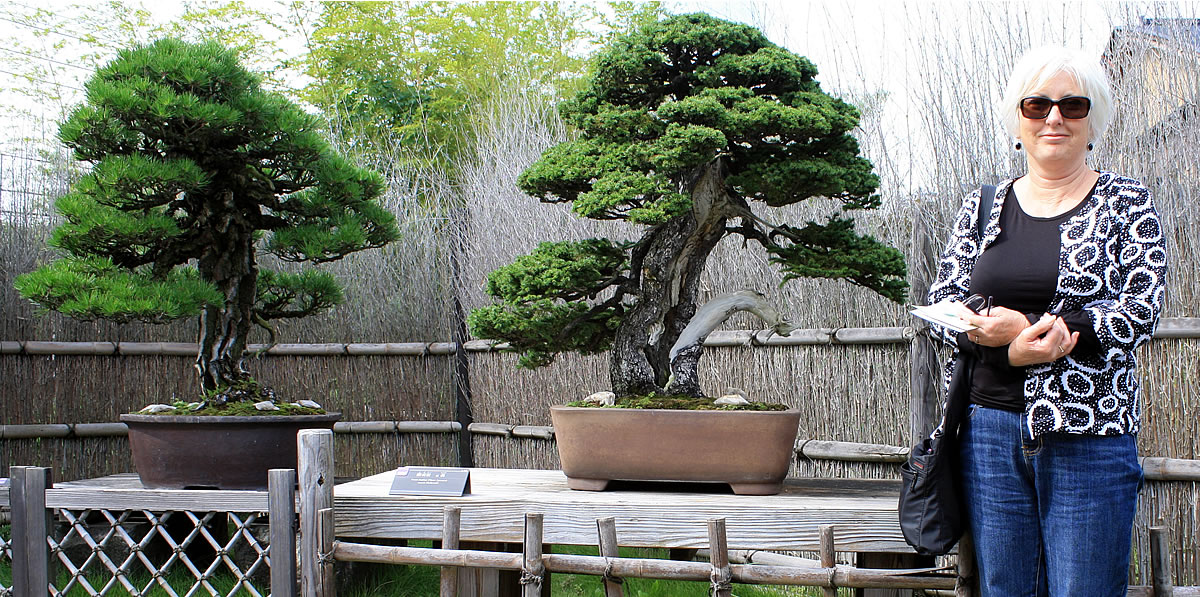 Omiya Bonsai Museum - Famous Yezo Spruce called 'Todoroki'
