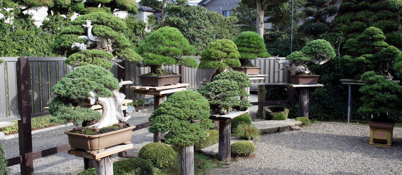 Masahiko Kimura part of his garden