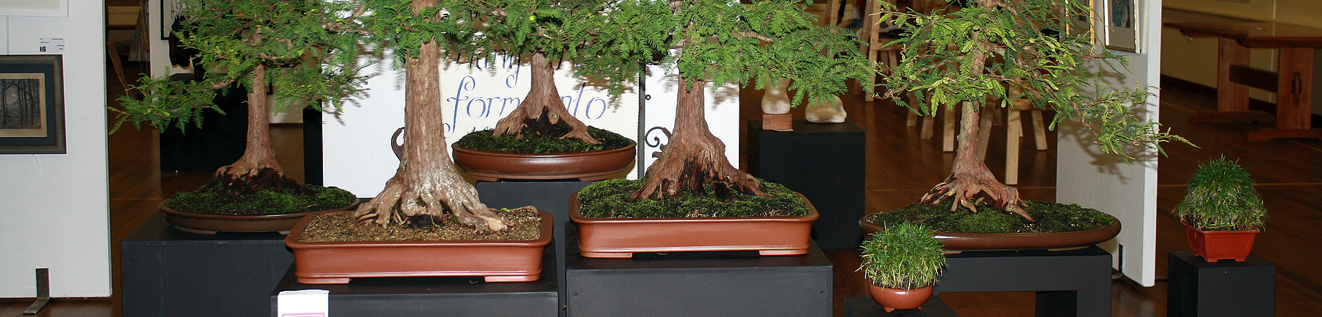 australian_bonsai_detached-_forest-01