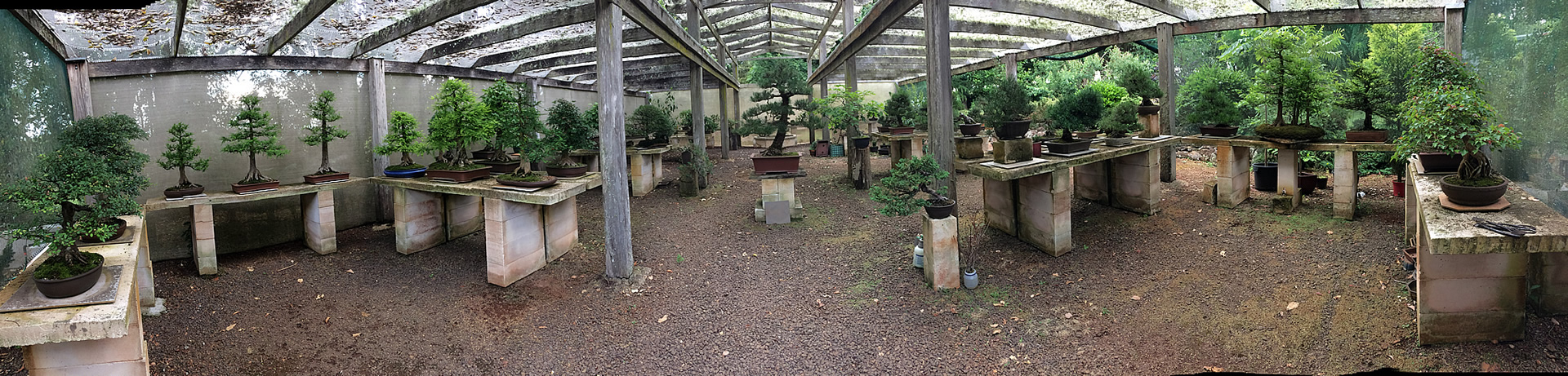sakura-bonsai-gallery-dorrigo-banner-01