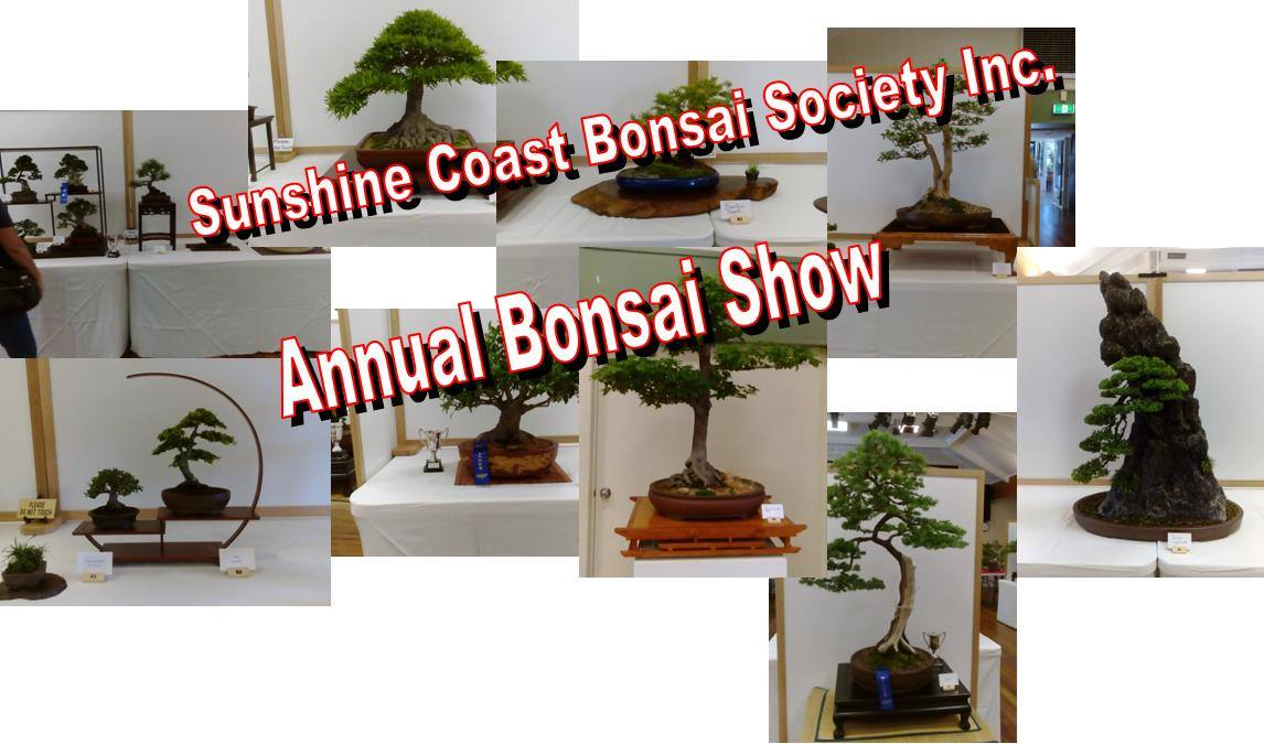 sunshine coast bonsai
