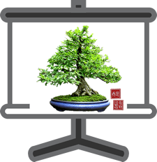 Slideshow art fo bonsai