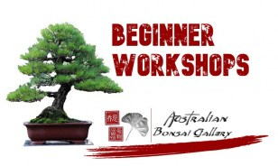 australian-bonsai-gallery-beginner-workshops9