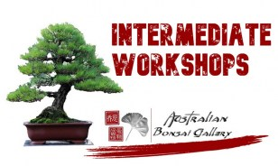 australian-bonsai-gallery-intermediate-workshop