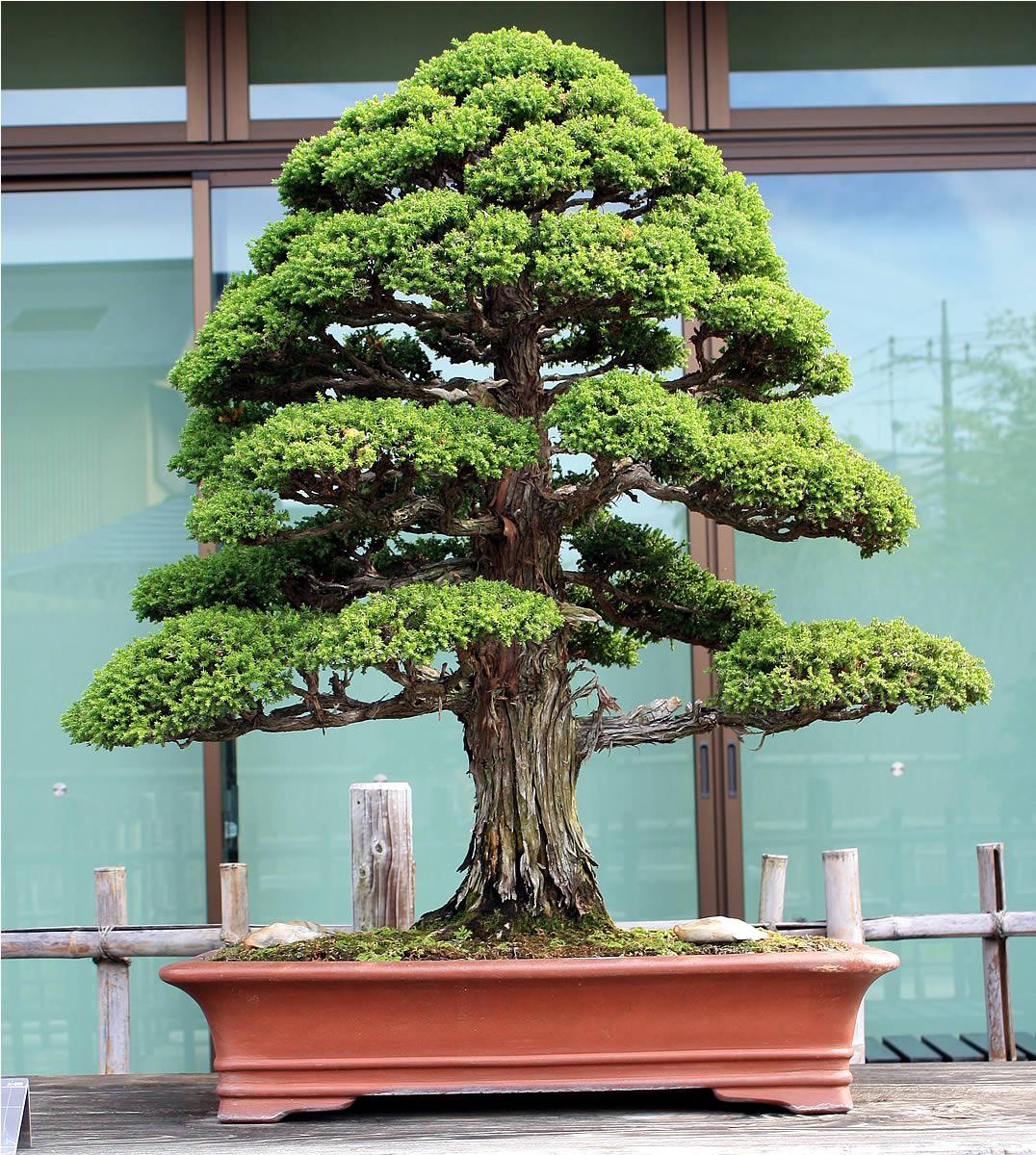 Omiya Bonsai Museum 02