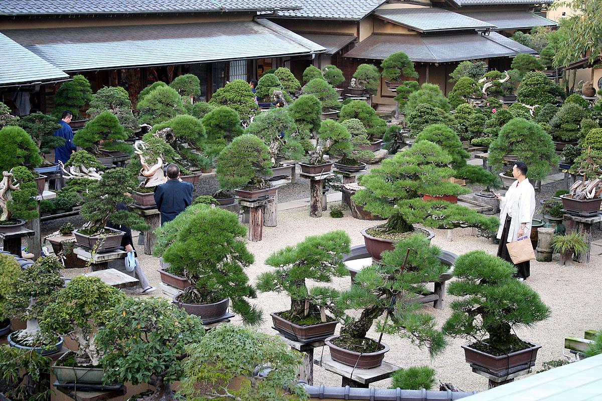Kunio Kobayashi Shunka-en Bonsai Museum