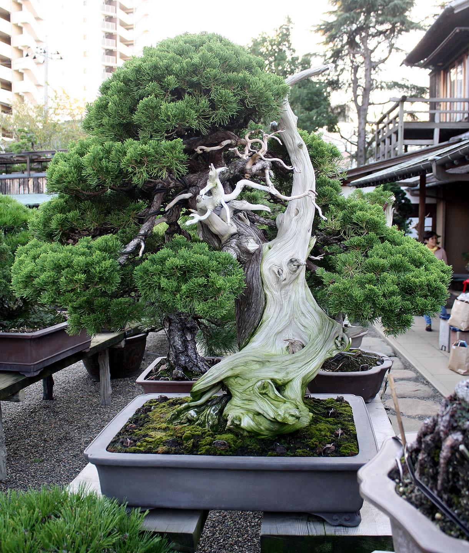 kobayashi-shimpaku