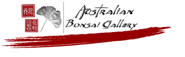 Australian Bonsai Gallery