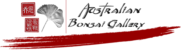 enews logo australian bonsai dorrigo